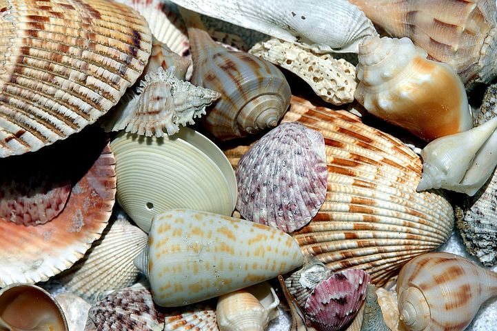 This image has an empty alt attribute; its file name is sea-shells.jpg