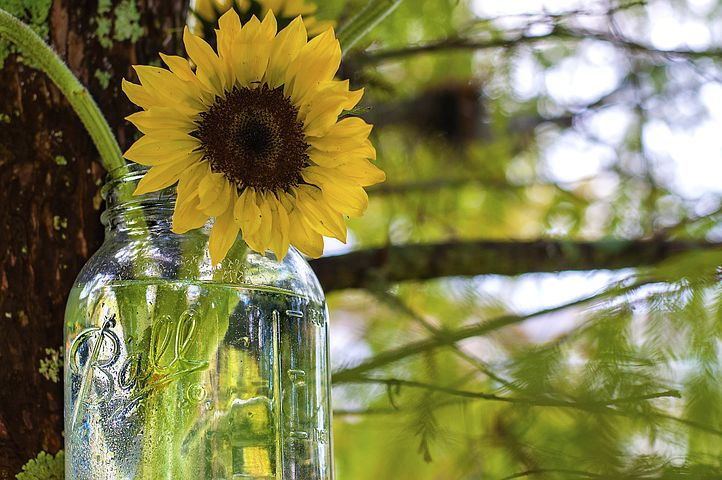 This image has an empty alt attribute; its file name is sunflower-985376__480-3.jpg